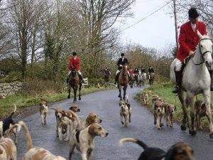 Hunting as a sport with hounds.