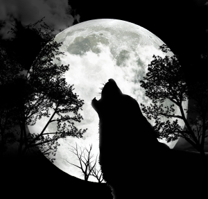 The image of a wolf howling at the moon