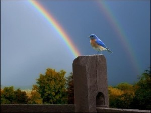 """Somewhere over the rainbow, skies are blue...."""