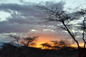 "Tsavo - ""a place of slaughter."" Tsavo, in 1898, was considered to be ""the worst place on Earth."""