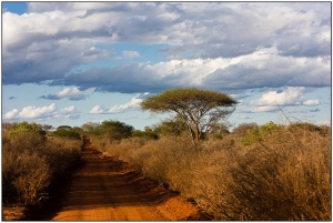 The friendless, rugged landscape of Tsavo.