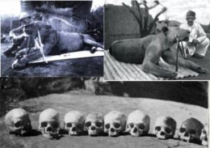 The Tsavo Man-Eaters - one of the worst cases of man-eaters recorded.