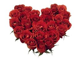 Roses for my sweet Valentine!