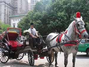 A horse-drawn carriage in the city.