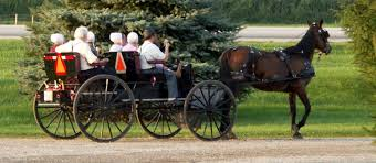 Amish Women in a Buggy